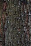 Φλοιός δέντρων με τη φόρμα λειχήνων Στοκ Εικόνες