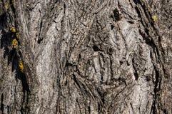 Φλοιός δέντρων με το κίτρινο βρύο Στοκ εικόνες με δικαίωμα ελεύθερης χρήσης