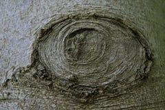 Φλοιός δέντρων με το σχέδιο ματιών, Γερμανία Στοκ εικόνα με δικαίωμα ελεύθερης χρήσης