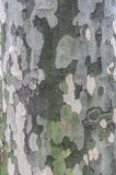 Φλοιός δέντρων Στοκ φωτογραφία με δικαίωμα ελεύθερης χρήσης