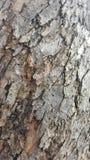 Φλοιός δέντρων/ξύλινη σύσταση αφηρημένη σύσταση Στοκ φωτογραφίες με δικαίωμα ελεύθερης χρήσης