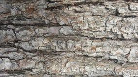 Φλοιός δέντρων/ξύλινη σύσταση αφηρημένη σύσταση Στοκ Φωτογραφίες