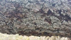 Φλοιός δέντρων/ξύλινη σύσταση αφηρημένη σύσταση Στοκ εικόνα με δικαίωμα ελεύθερης χρήσης