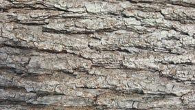 Φλοιός δέντρων/ξύλινη σύσταση αφηρημένη σύσταση Στοκ Εικόνες