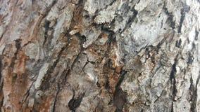 Φλοιός δέντρων/ξύλινη σύσταση αφηρημένη σύσταση Στοκ Εικόνα