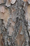 Φλοιός δέντρων πεύκων Στοκ φωτογραφία με δικαίωμα ελεύθερης χρήσης