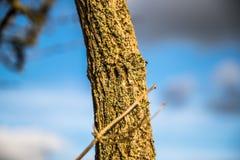 Φλοιός δέντρων στον ήλιο Στοκ Εικόνες