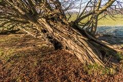 Φλοιός δέντρων στον ήλιο Στοκ Φωτογραφίες