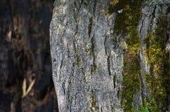 Φλοιός δέντρων υποβάθρου Στοκ φωτογραφία με δικαίωμα ελεύθερης χρήσης