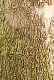 Φλοιός δέντρων ως υπόβαθρο Στοκ φωτογραφία με δικαίωμα ελεύθερης χρήσης