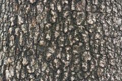 Φλοιός δέντρων Στοκ εικόνα με δικαίωμα ελεύθερης χρήσης