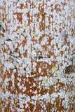 Φλοιός δέντρων Στοκ Φωτογραφία