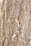 Φλοιός ενός δέντρου που φωτογραφίζεται πολύ Στοκ φωτογραφίες με δικαίωμα ελεύθερης χρήσης
