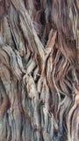 Φλοιός ενός Redwood Στοκ εικόνα με δικαίωμα ελεύθερης χρήσης