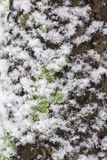 Φλοιός κάλυψης χιονιού του δέντρου Στοκ Φωτογραφίες