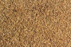 Φλοιός ρυζιού Στοκ εικόνες με δικαίωμα ελεύθερης χρήσης