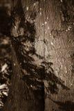 Φλοιός σε ένα δέντρο μια ηλιόλουστη ημέρα Στοκ Φωτογραφία