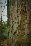 Φλοιός σε ένα δέντρο μια ηλιόλουστη ημέρα Στοκ εικόνες με δικαίωμα ελεύθερης χρήσης