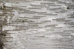 Φλοιός σημύδων Στοκ φωτογραφίες με δικαίωμα ελεύθερης χρήσης