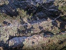 Φλοιός στη μέση δύο άγριων χρωμάτων Στοκ Φωτογραφία