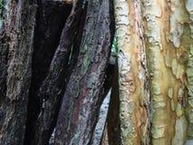 Φλοιός στη μέση δύο άγριων χρωμάτων Στοκ Εικόνες