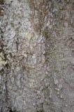 Φλοιός της λεύκας. Άνευ ραφής Tileable Στοκ Φωτογραφίες