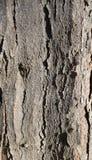 Φλοιός της κινηματογράφησης σε πρώτο πλάνο δέντρων Στοκ Εικόνα