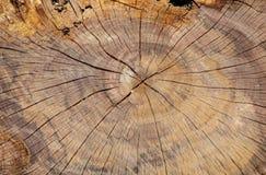 Φλοιός της σύστασης δέντρων Στοκ εικόνες με δικαίωμα ελεύθερης χρήσης