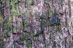Φλοιός του δέντρου και της σύστασης πεύκων στοκ φωτογραφίες