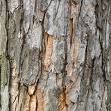 Φλοιός του παλαιού αποβαλλόμενου δέντρου Φυσική ανασκόπηση σύσταση Στοκ Εικόνες