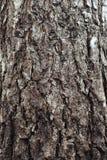 Φλοιός του υποβάθρου δέντρων Στοκ εικόνες με δικαίωμα ελεύθερης χρήσης