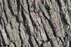 Φλοιός υποβάθρου ενός παλαιού δέντρου Φλοιός σύστασης Στοκ φωτογραφία με δικαίωμα ελεύθερης χρήσης