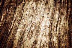 Φλοιός φλοιών φλοιών δέντρων εικόνων Στοκ εικόνα με δικαίωμα ελεύθερης χρήσης