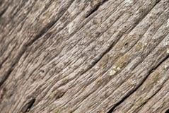 Φλοιός Στοκ φωτογραφία με δικαίωμα ελεύθερης χρήσης
