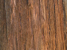 Φλοιός Sequoia του δέντρου Sempervirens Στοκ Εικόνα