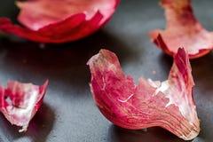 Φλούδα κρεμμυδιών Στοκ Εικόνα