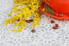 Φλυτζάνι και mimosa Στοκ Εικόνες