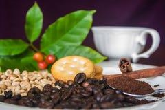 Φλυτζάνι, φασόλια, κανέλα και κροτίδα καφέ Στοκ εικόνες με δικαίωμα ελεύθερης χρήσης