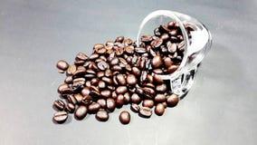 Φλυτζάνι, φασόλια καφέ στοκ φωτογραφίες με δικαίωμα ελεύθερης χρήσης