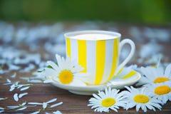 Φλυτζάνι Porcelainl με το πράσινο τσάι στον πίνακα Στοκ Φωτογραφία