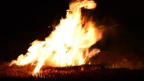 Φλόγα πυρκαγιάς στο μαύρο backgroud απόθεμα βίντεο