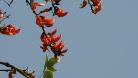 Φλόγα του δασικών λουλουδιού και του αέρα απόθεμα βίντεο