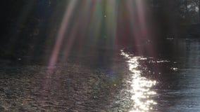 Φλόγα φακών καμερών σε μια ακτή ποταμών Δούναβη στο Νόβι Σαντ απόθεμα βίντεο