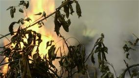 Φλόγες μεταξύ των δέντρων απόθεμα βίντεο