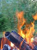 φλόγες σε ένα δάσος στοκ εικόνες