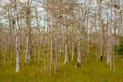 Φλώριδα Everglades Στοκ Εικόνα