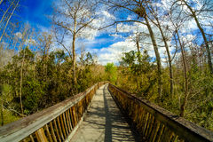 Φλώριδα Everglades Στοκ εικόνες με δικαίωμα ελεύθερης χρήσης