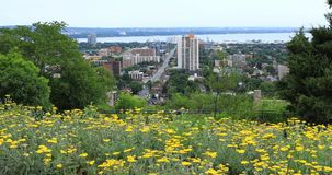 Χάμιλτον, Καναδάς, κέντρο πόλεων με τα λουλούδια στο πρώτο πλάνο 4K απόθεμα βίντεο