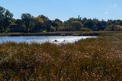 Χάμιλτον, ΚΑΝΑΔΑΣ - 16 Οκτωβρίου 2018: ζωηρόχρωμο ηλιόλουστο σύνολο φθινοπώρου στοκ εικόνα
