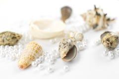 Χάντρες και θαλασσινά κοχύλια μαργαριταριών Στοκ Φωτογραφίες